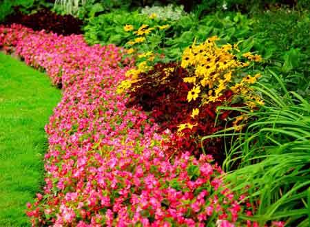 bordyury-iz-cvetov