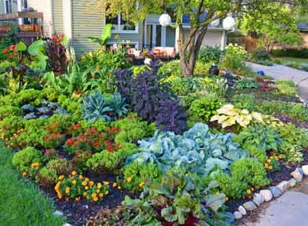 Как создать овощной цветник