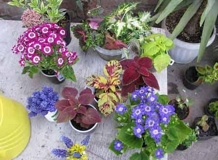 Как правильно выбрать рассаду цветов