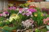 Создаем садовую клумбу