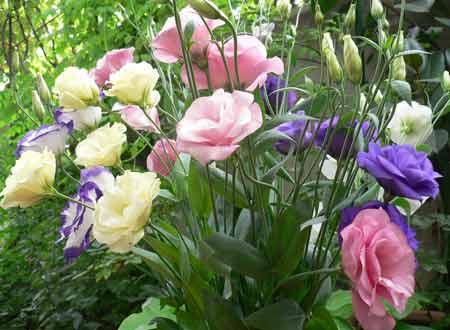 posev-cvetov3