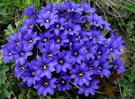 posev-cvetov4