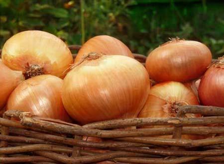 Выращивание лука-репки из семян