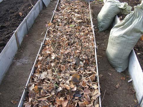 Теплая грядка для огурцов как сделать осенью